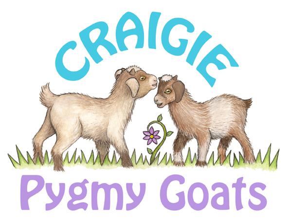 Craigie Pygmy Goats
